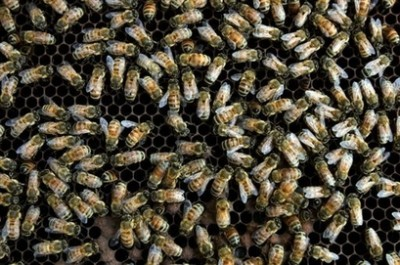 swarm of 1000 bees at airport