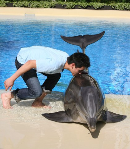 David with Dolphin